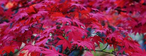 Follagem de Outono